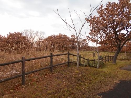 手稲山口バッタ塚 東から西を望む1
