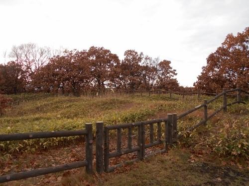 手稲山口バッタ塚 東から西を望む2