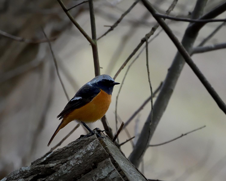 公園の野鳥_00200215_03