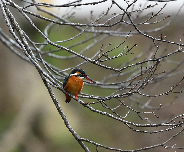 公園の野鳥_00200215_04