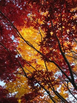 樹芸センターの紅葉1