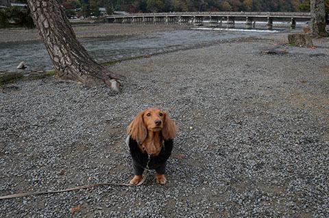 dog20181121_1_a.jpg