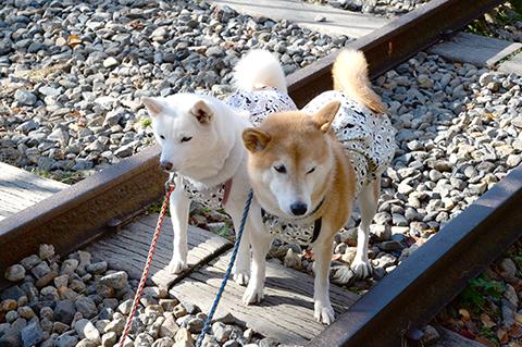 dog20191109_5.jpg
