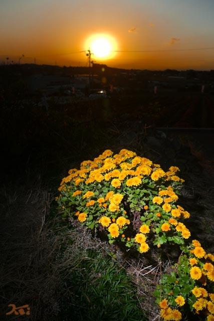 20191101夕陽と05