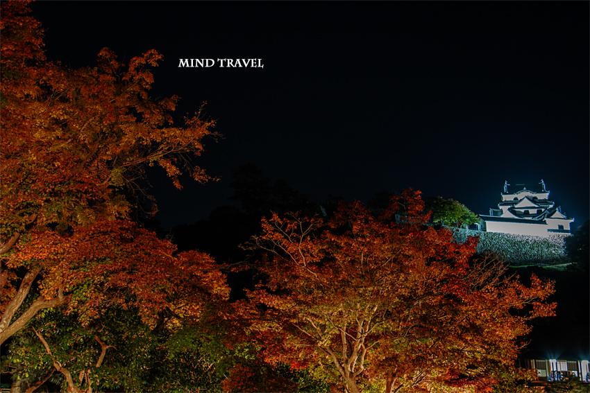 彦根城 ライトアップ4