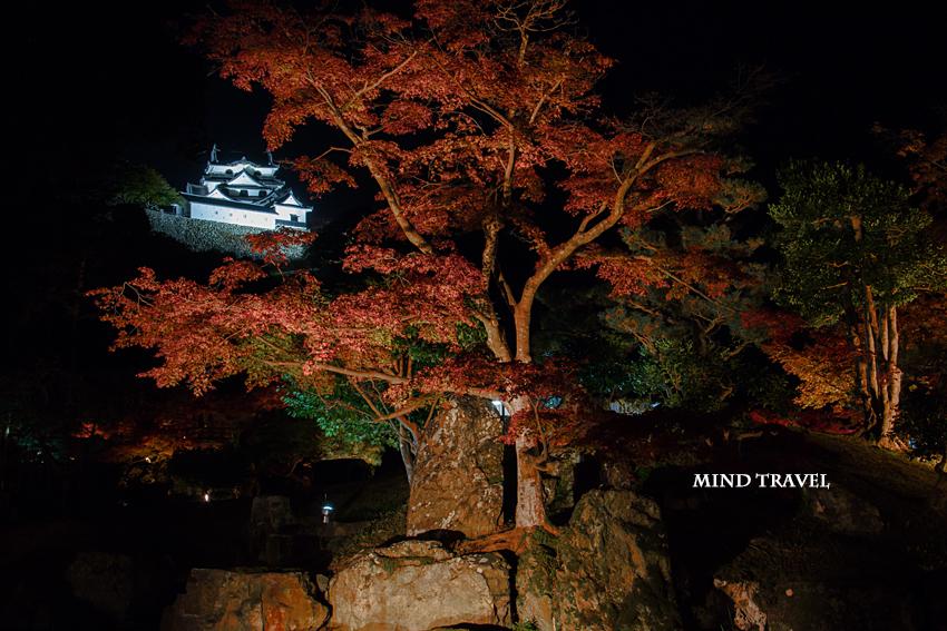 彦根城 ライトアップ3
