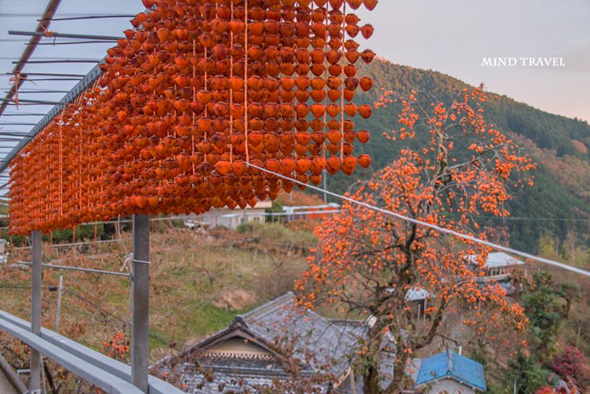 串柿の里7