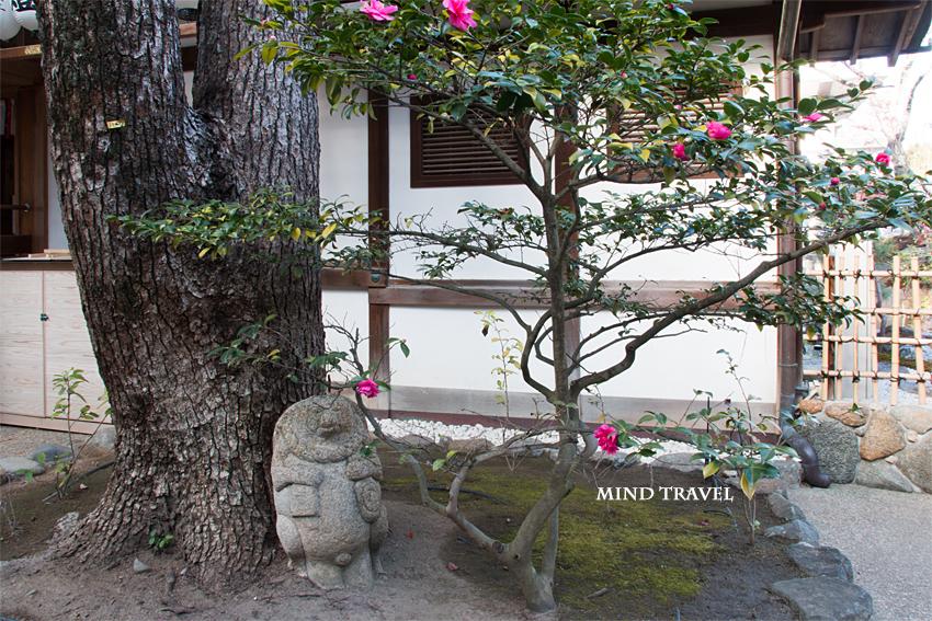 石切神社 山茶花と狸の像