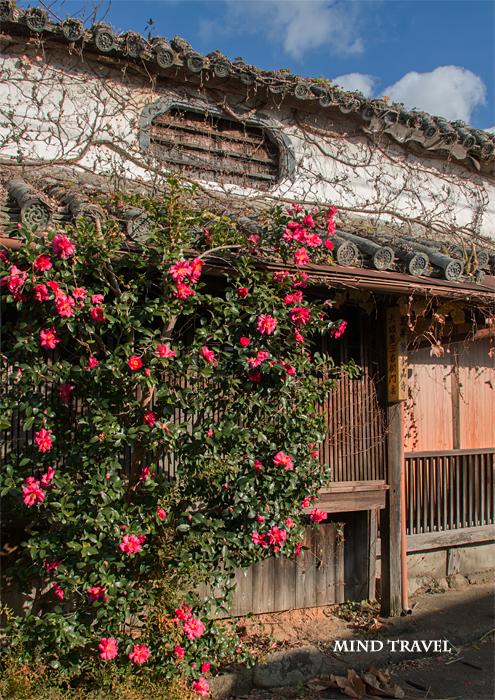湯浅 民家と山茶花