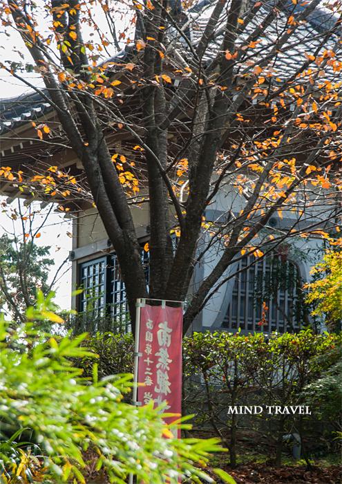 岩間寺 桜紅葉2