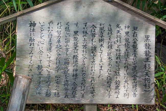 岩間寺 黒龍龍王杉