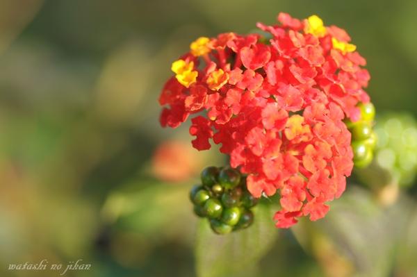 flower191209.jpg