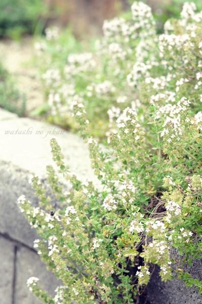 flower20191013.jpg