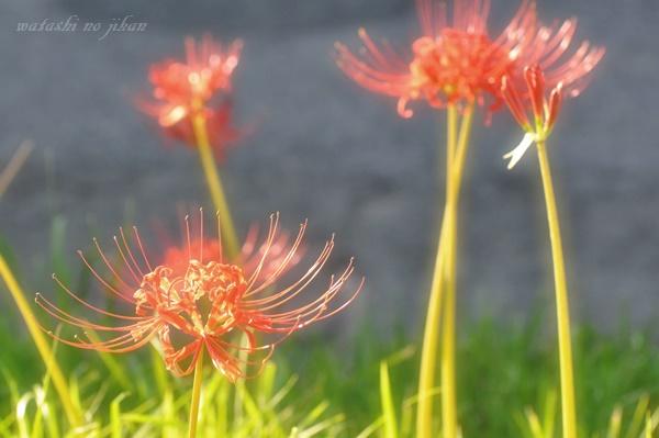 flower20191014.jpg