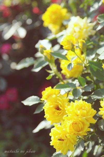flower20191025.jpg