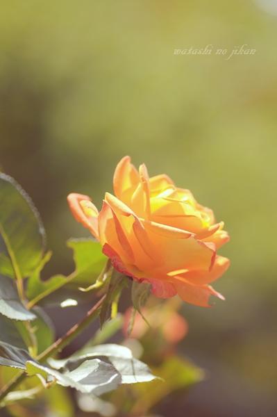 flower20191115.jpg