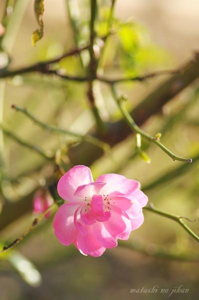 flower20191116.jpg