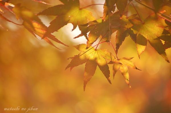 photo20191201.jpg