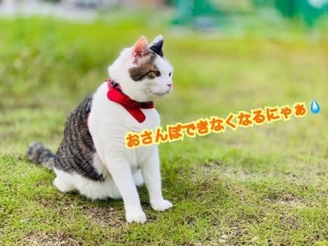 th_IMG_3828.jpg