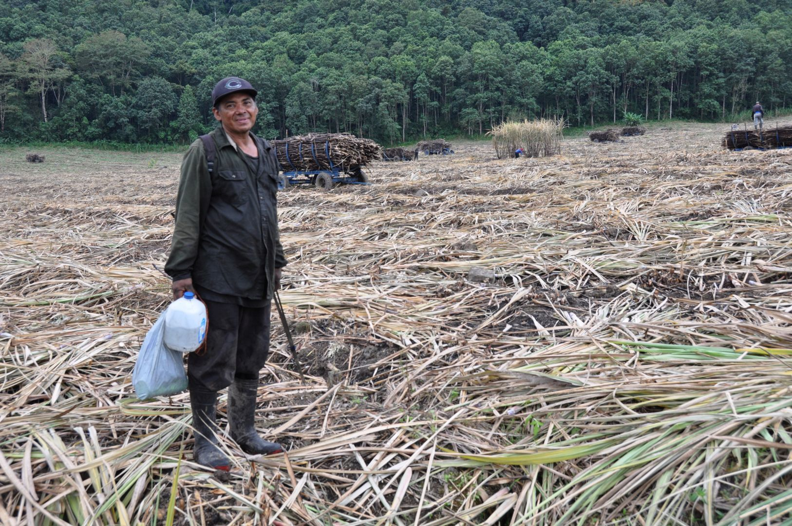 campo de caña en costarica