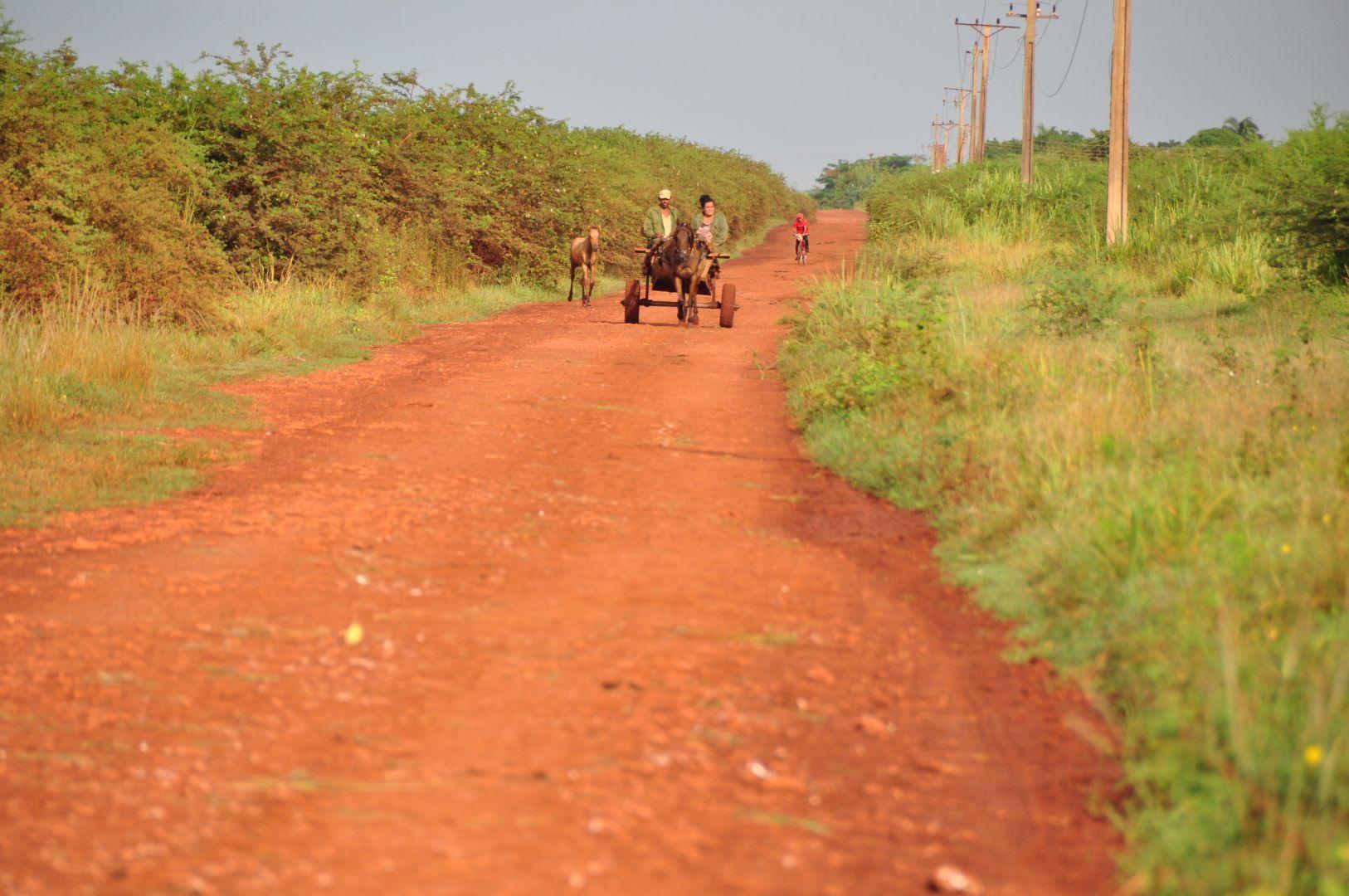carro de caballo