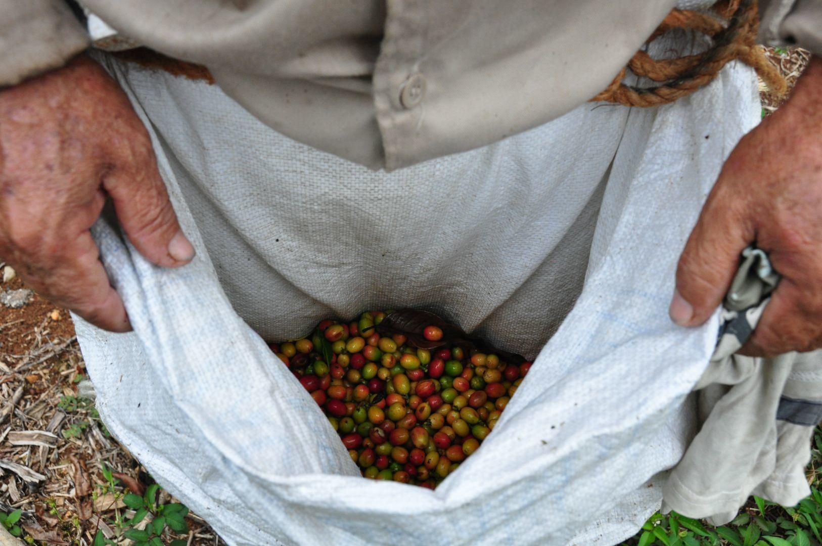 cafe cubano en guantanamo
