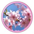 桜、桃、梅、紅葉、樹木 他