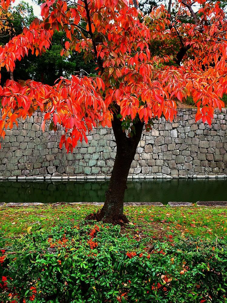 2019_11_18 京都:二条城周辺11
