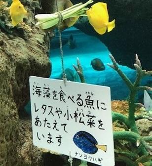 名古屋港水族館 2020 9