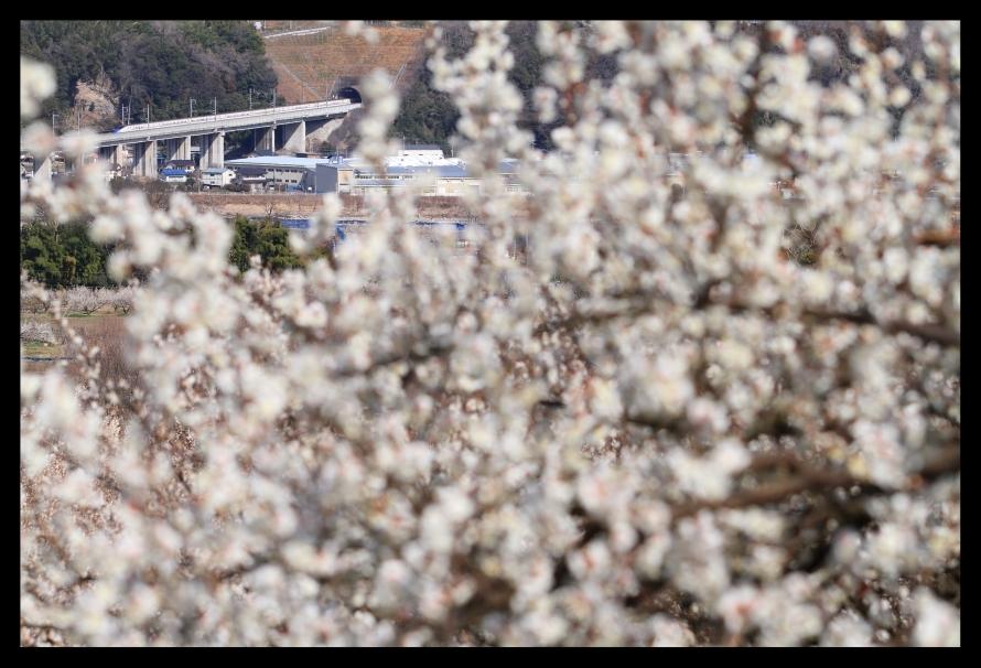 新幹線20301