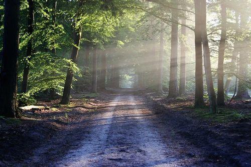 the-road-815297_960_720.jpg