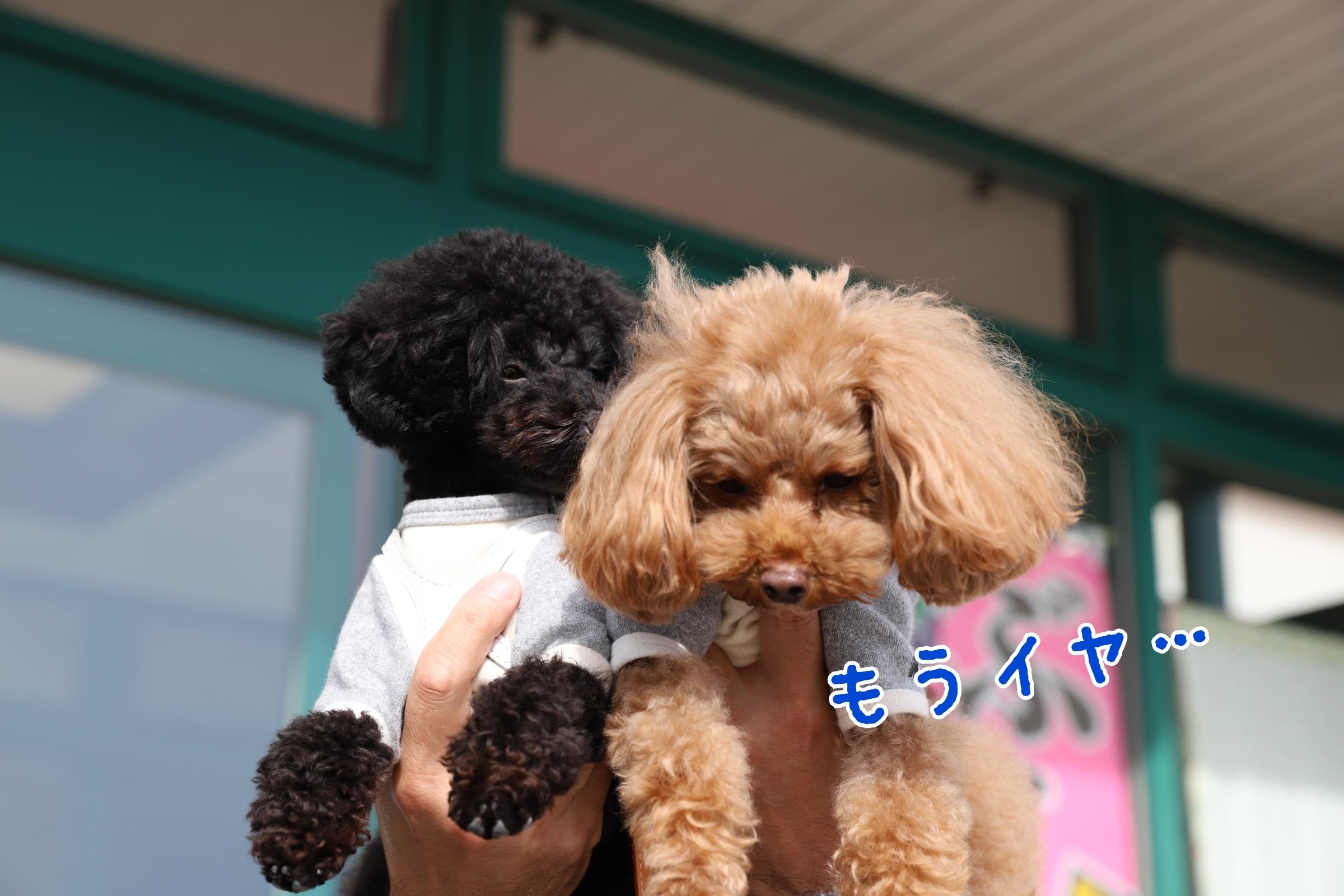 20-02-04-13-24-37-176_deco.jpg