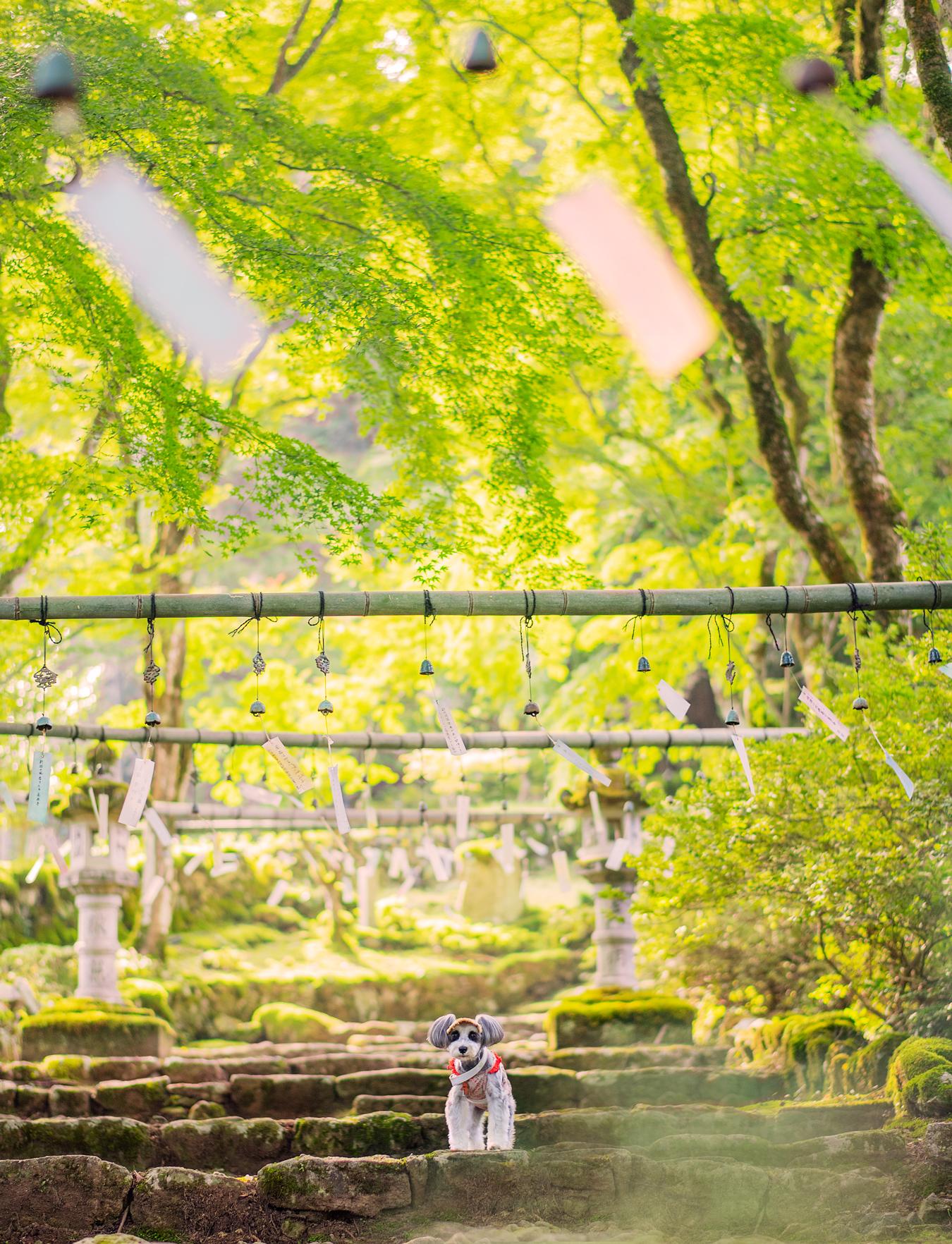 高源寺1−2