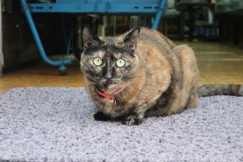 ゆあさ神佛具店猫 (3)_R