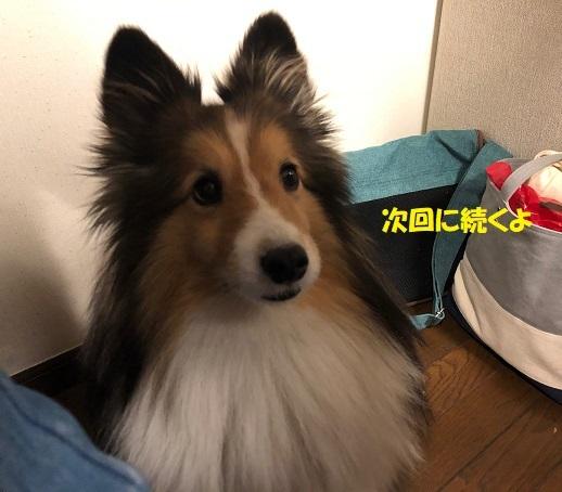 シオンちゃん家8