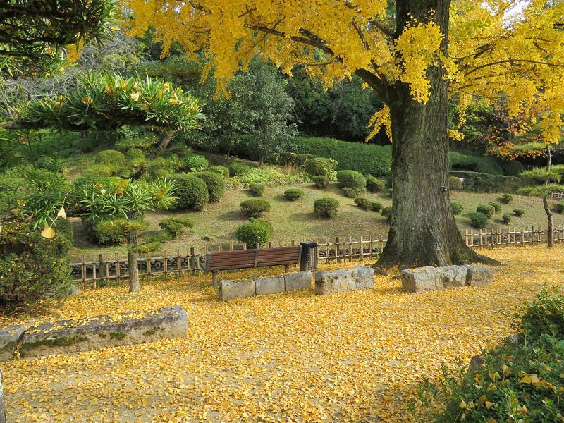 落ち葉のじゅうたん0111 (1)