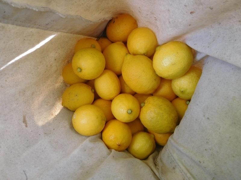 レモン出荷0201 (2)
