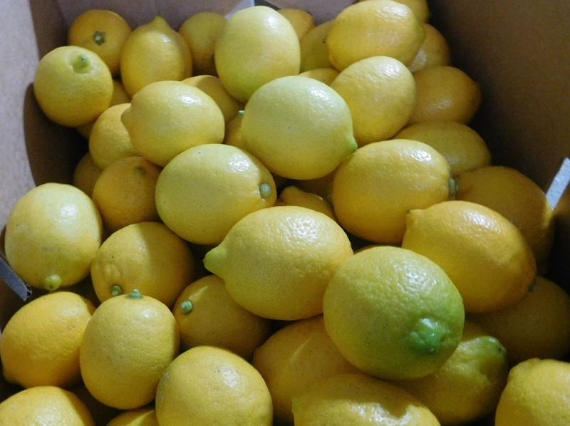 レモン出荷0201 (3)