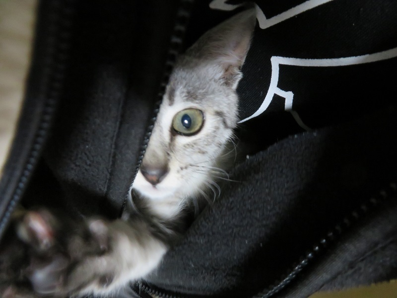 シャンプー猫0201 (1)