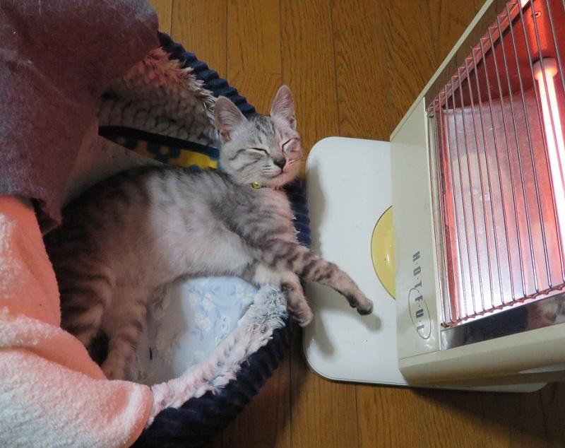 シャンプー猫0201 (2)