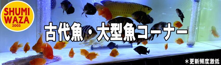 SHUMIWAZA.jpg