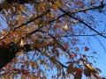 秋も桜が一番