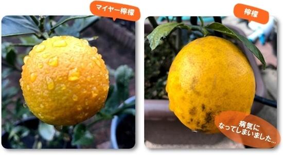 檸檬0113