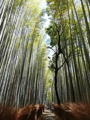 竹林の小径2005
