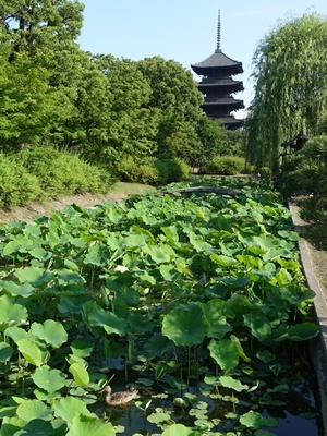 東寺と鴨2006