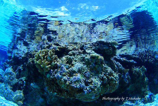06-1★慶良間諸島奧武島のサンゴ