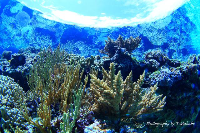 06-2★慶良間諸島奧武島のサンゴ