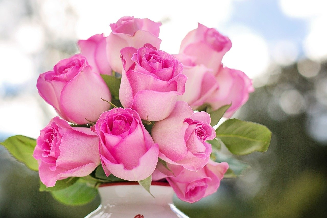 pink-roses-2191636_1280.jpg