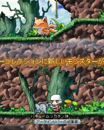 Maple_19538a.jpg