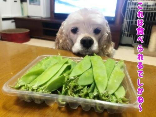 食べられでしかね